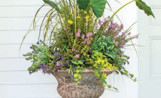 Must Have Monday // Green Foliage for Containers