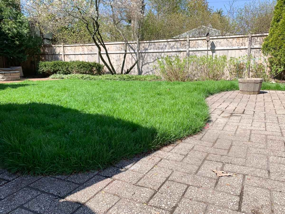 How To Maintain Your Lawn With Lowe S Home Keki